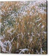 Kans Grass In Mist Acrylic Print