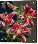 Karen's Lilies Acrylic Print