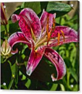 Karen's Lily Acrylic Print