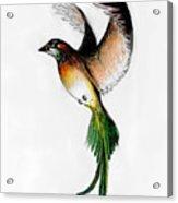 Kathleen's Bird Acrylic Print