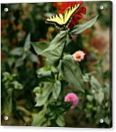 Kathy's Butterfly Acrylic Print