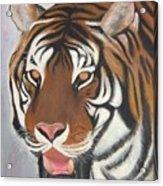 Kathystiger Acrylic Print