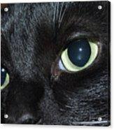 Katy - The Eyes Have It Acrylic Print