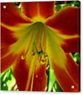 Katydid Surprise Acrylic Print