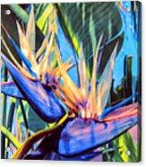 Kauai Bird Of Paradise Acrylic Print