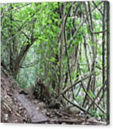 Kauai Forest Path For Secret Falls Acrylic Print
