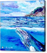Kauai Humpback Whale Acrylic Print
