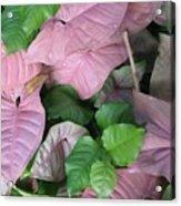 Kauai  Pinks Acrylic Print