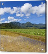 Kauai Wet Taro Farm Acrylic Print