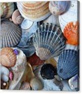 Kayla's Shells Acrylic Print
