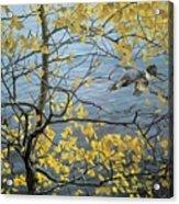Kb Bateman Aspen And Kingfisher Robert Bateman Acrylic Print