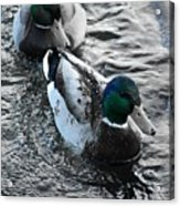 Keep Swimming Acrylic Print