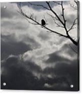 Keeping Above The Storm Acrylic Print
