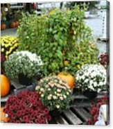Kelly Garden Mums  Pumpkins And Duck Or Goose Acrylic Print