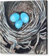 Kelly's Nest Acrylic Print