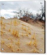 Kelso Dune Slopes Acrylic Print