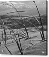 Kelso Dunes Acrylic Print