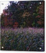 Kensington 10  Acrylic Print