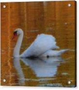 Kensingtons Swan 1  Acrylic Print