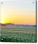 Kentucky Wheat Crop Acrylic Print