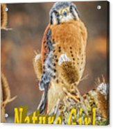Kestrel Nature Wear Acrylic Print