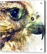 Kestrel Watercolor Painting Acrylic Print
