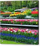 Keukenhof Tulips Ornamental Garden  Acrylic Print