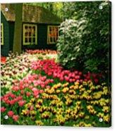 Keukenhof's Tulips Acrylic Print