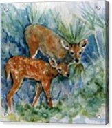 Key Deer Acrylic Print