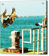 Key West Landing Acrylic Print