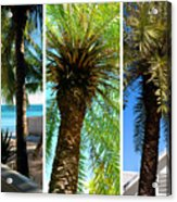 Key West Palm Triplets Acrylic Print by Susanne Van Hulst