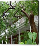 Key West Pink And Green Acrylic Print