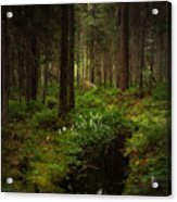 Keys In The Woods Acrylic Print