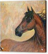Kiger Mustang Acrylic Print