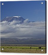 Kilimanjaro With Elephants Acrylic Print