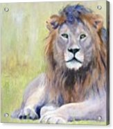 King At Rest Acrylic Print