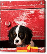 King Charles Cavalier Puppy  Acrylic Print by Garry Gay