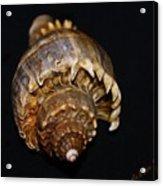 King Conch 2 - Photosbydm Acrylic Print