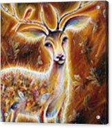 King-deer Acrylic Print