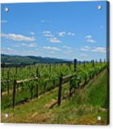 King Estate Vineyard Acrylic Print