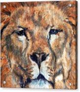 King Lion Acrylic Print