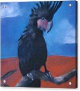 King Of Cockatoos Acrylic Print