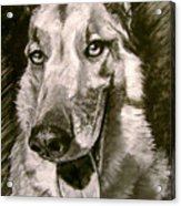 King Of The Dogs Acrylic Print