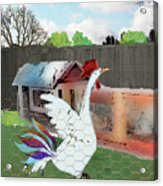 King Of The Hen House Acrylic Print