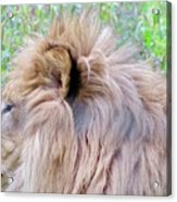 King Of The Jungle Profile  Acrylic Print