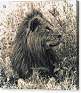 King Waiting Acrylic Print
