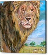 Kingdom Of The Lion Acrylic Print