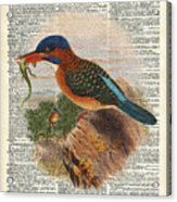 Kingfisher Bird With A Lizard Illustration Over A Old Dictionary Acrylic Print