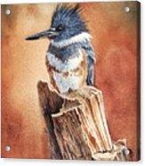 Kingfisher I Acrylic Print