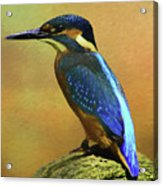 Kingfisher Perch Acrylic Print